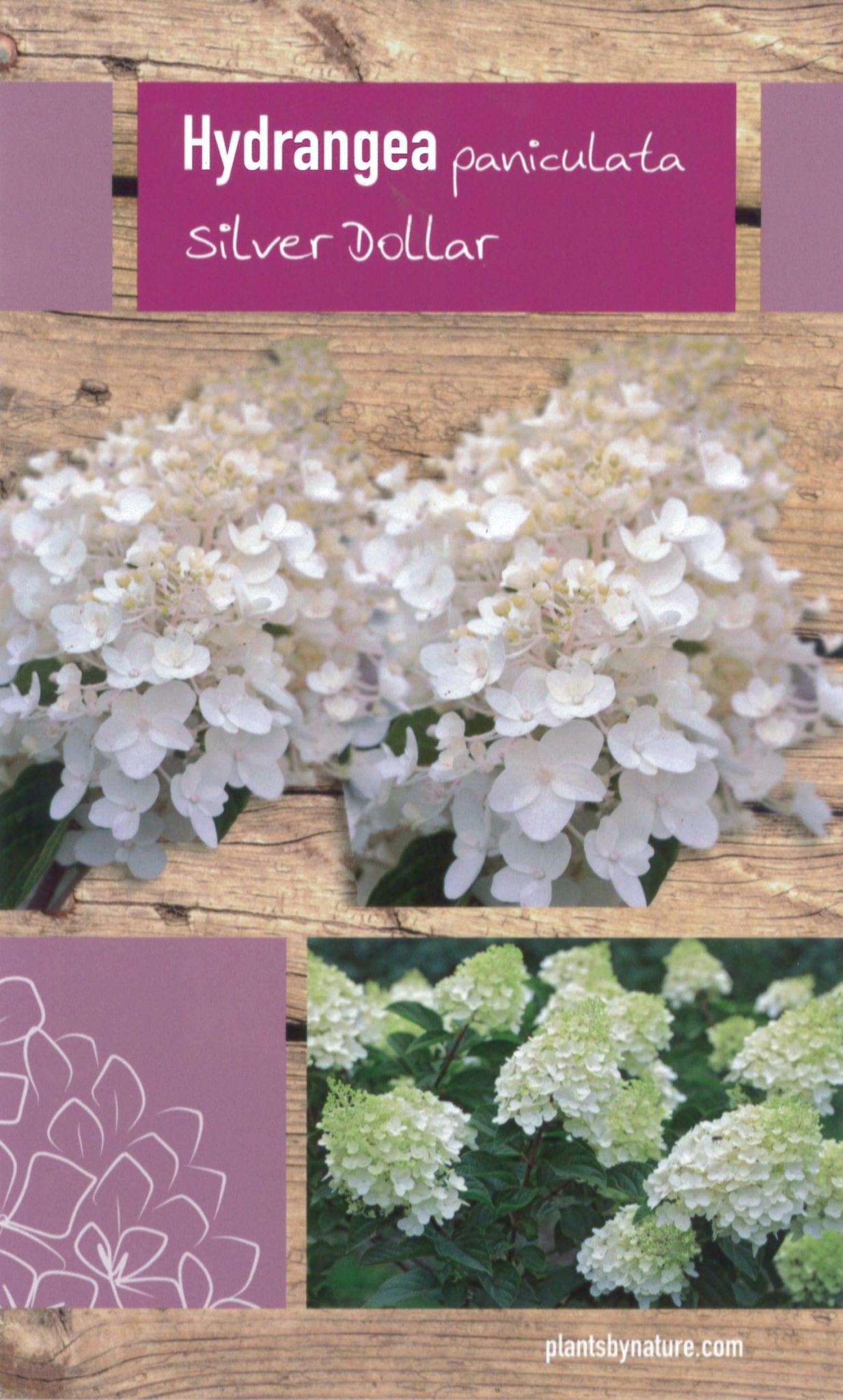 De Hydrangea paniculata 'Silver Dollar' etiket voorzijde | Plants By Nature - gespecialiseerd in hydrangea