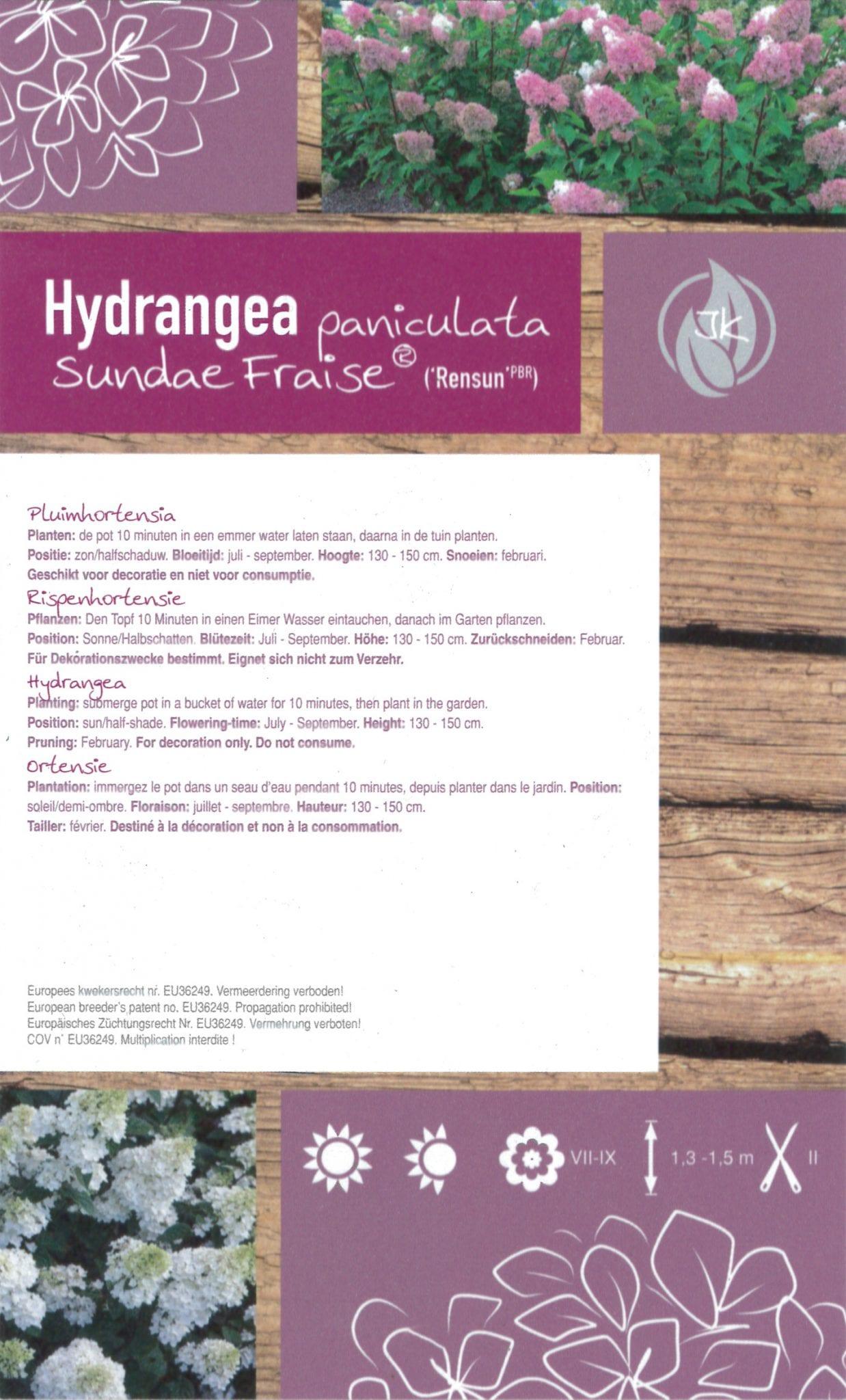 De Hydrangea paniculata 'Sundae Fraise (Rensun PBR)' etiket achterzijde | Plants By Nature - gespecialiseerd in hydrangea