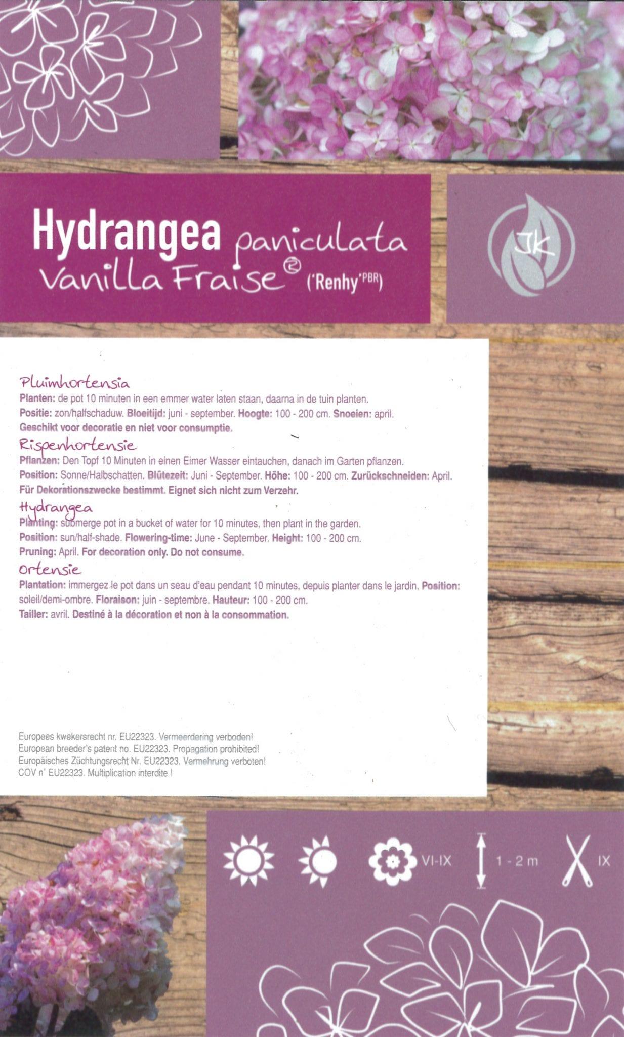 De Hydrangea paniculata 'Vanille Fraise (Renhy PBR)' etiket achterzijde | Plants By Nature - gespecialiseerd in hydrangea