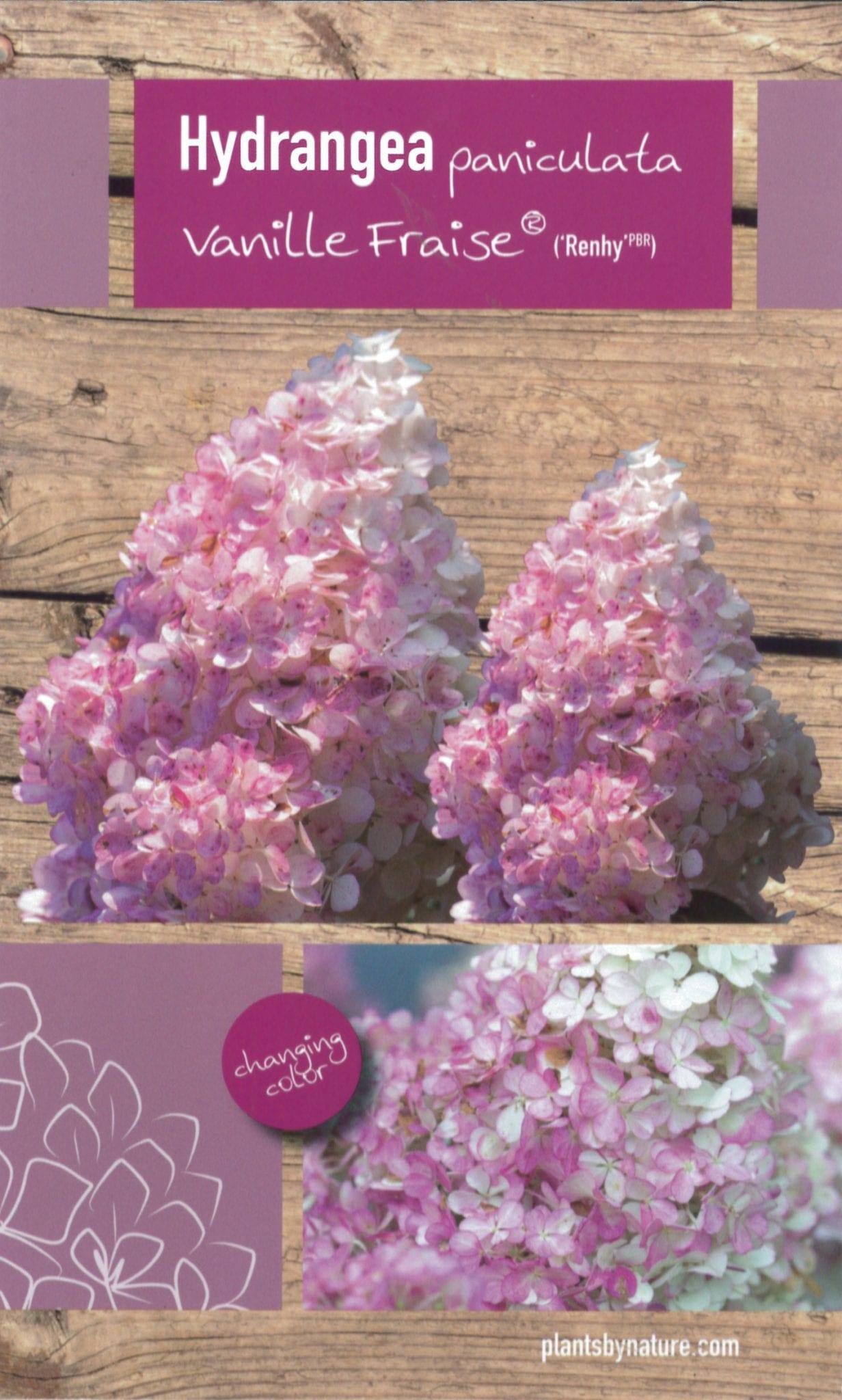 De Hydrangea paniculata 'Vanille Fraise (Renhy PBR)' etiket voorzijde | Plants By Nature - gespecialiseerd in hydrangea