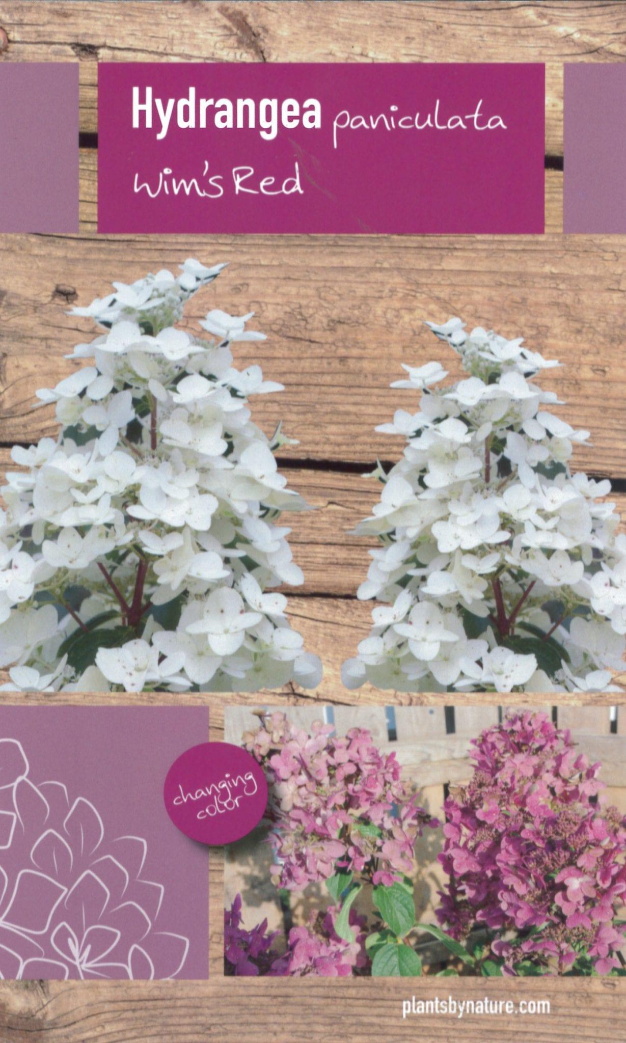 De Hydrangea paniculata 'Wim's Red' etiket voorzijde | Plants By Nature - gespecialiseerd in hydrangea