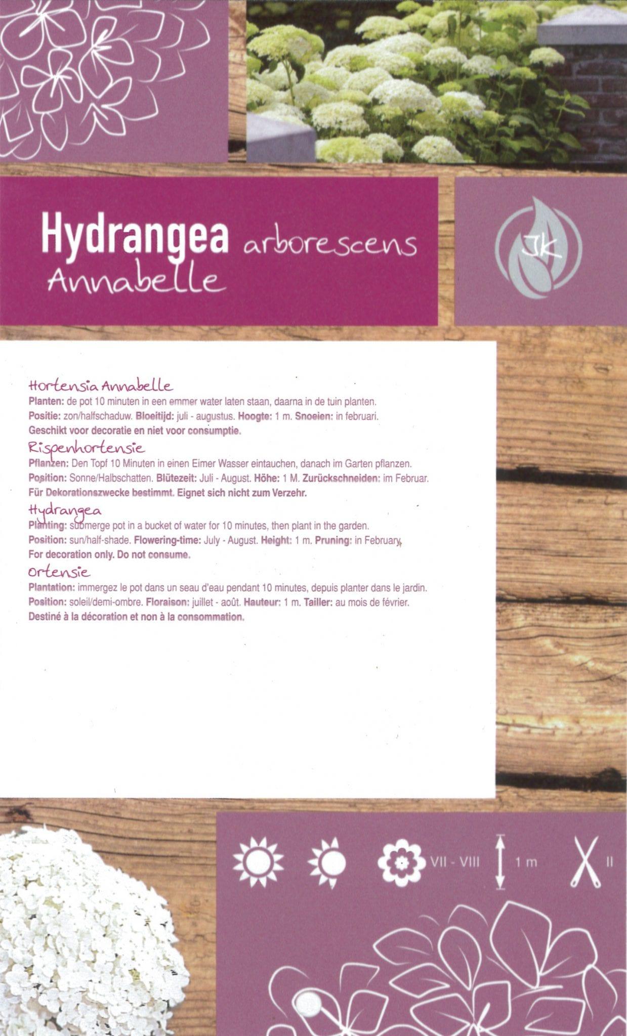 Hydrangea arborescent 'Strong Annabelle' etiket achterzijde | Plants By Nature - gespecialiseerd in hydrangea
