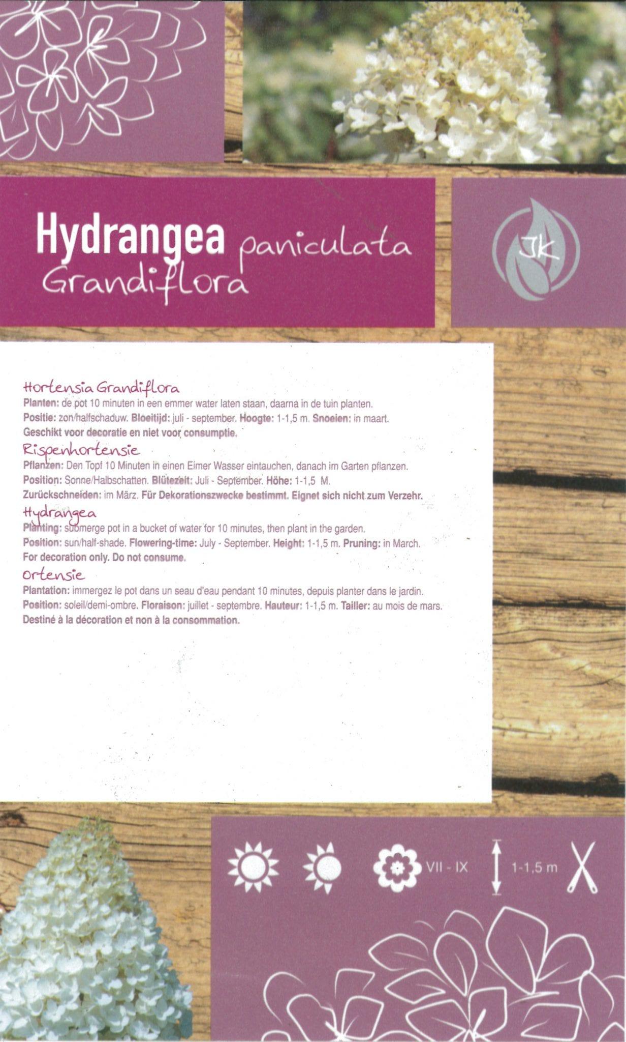 "Hydrangea Paniculata ""GrandiFlora"" etiket achterzijde | Plants By Nature - gespecialiseerd in hydrangea"