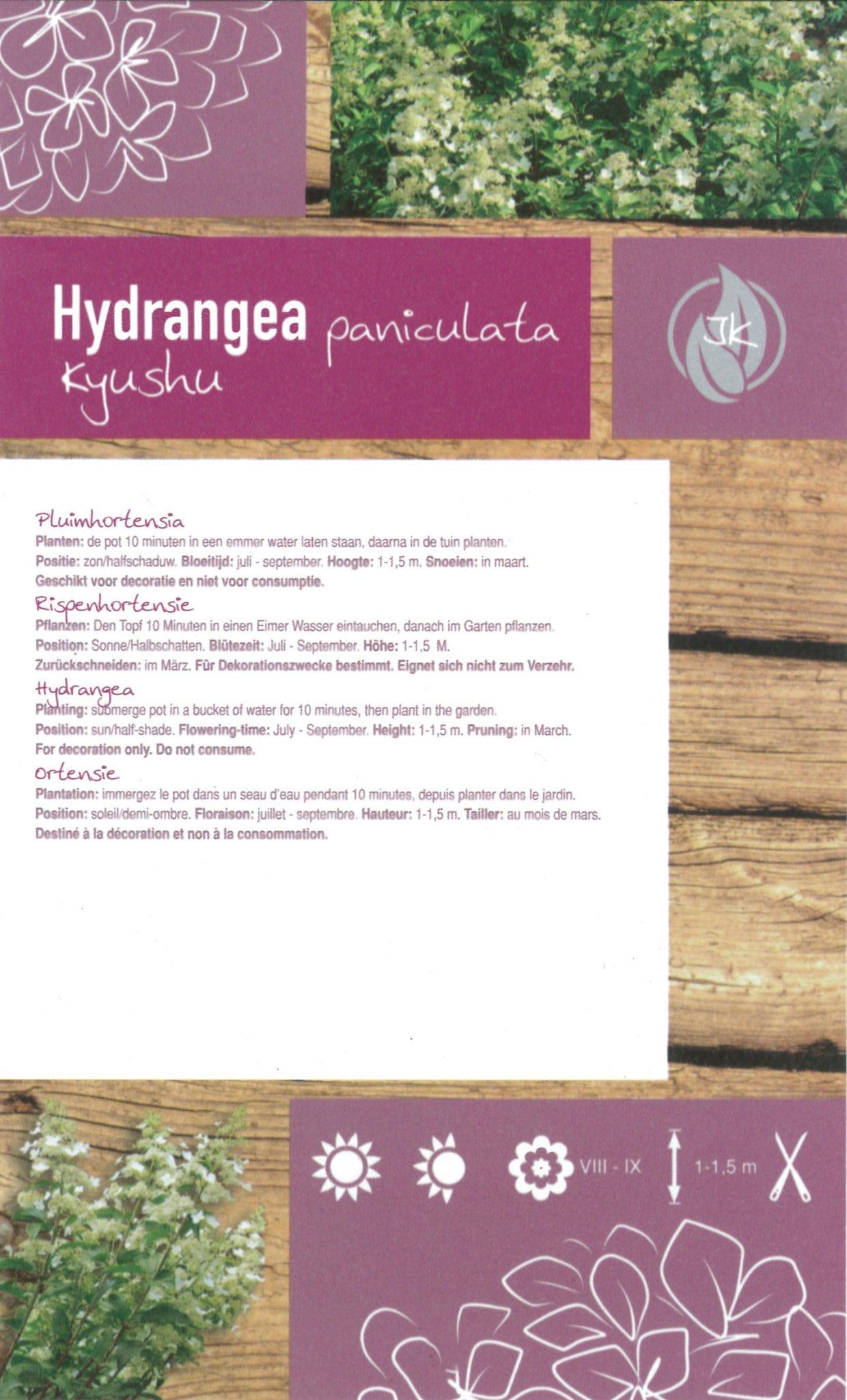 "Hydrangea Paniculata ""Kyushu"" etiket achterzijde | Plants By Nature - gespecialiseerd in hydrangea"