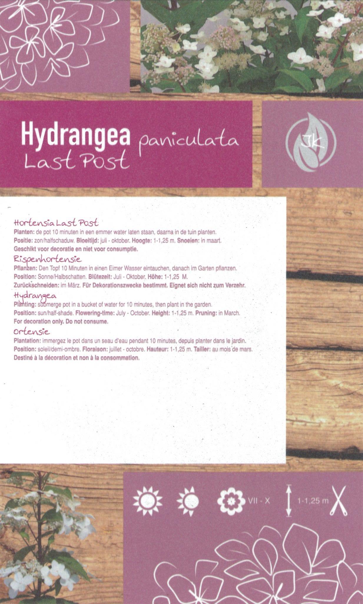 "Hydrangea Paniculata ""Last Post"" etiket achterzijde | Plants By Nature - gespecialiseerd in hydrangea"