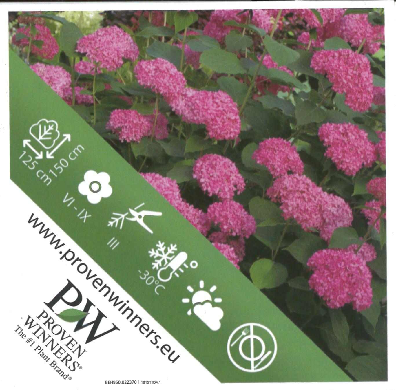 Hydrangea Proven Winners 'Pink Annabelle' etiket achterzijde | Plants By Nature - gespecialiseerd in hydrangea