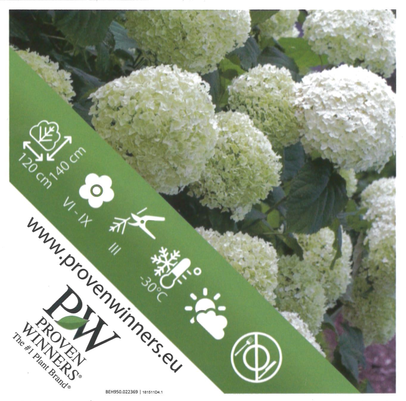 Hydrangea Proven Winners 'Strong Annabelle' etiket achterzijde | Plants By Nature - gespecialiseerd in hydrangea