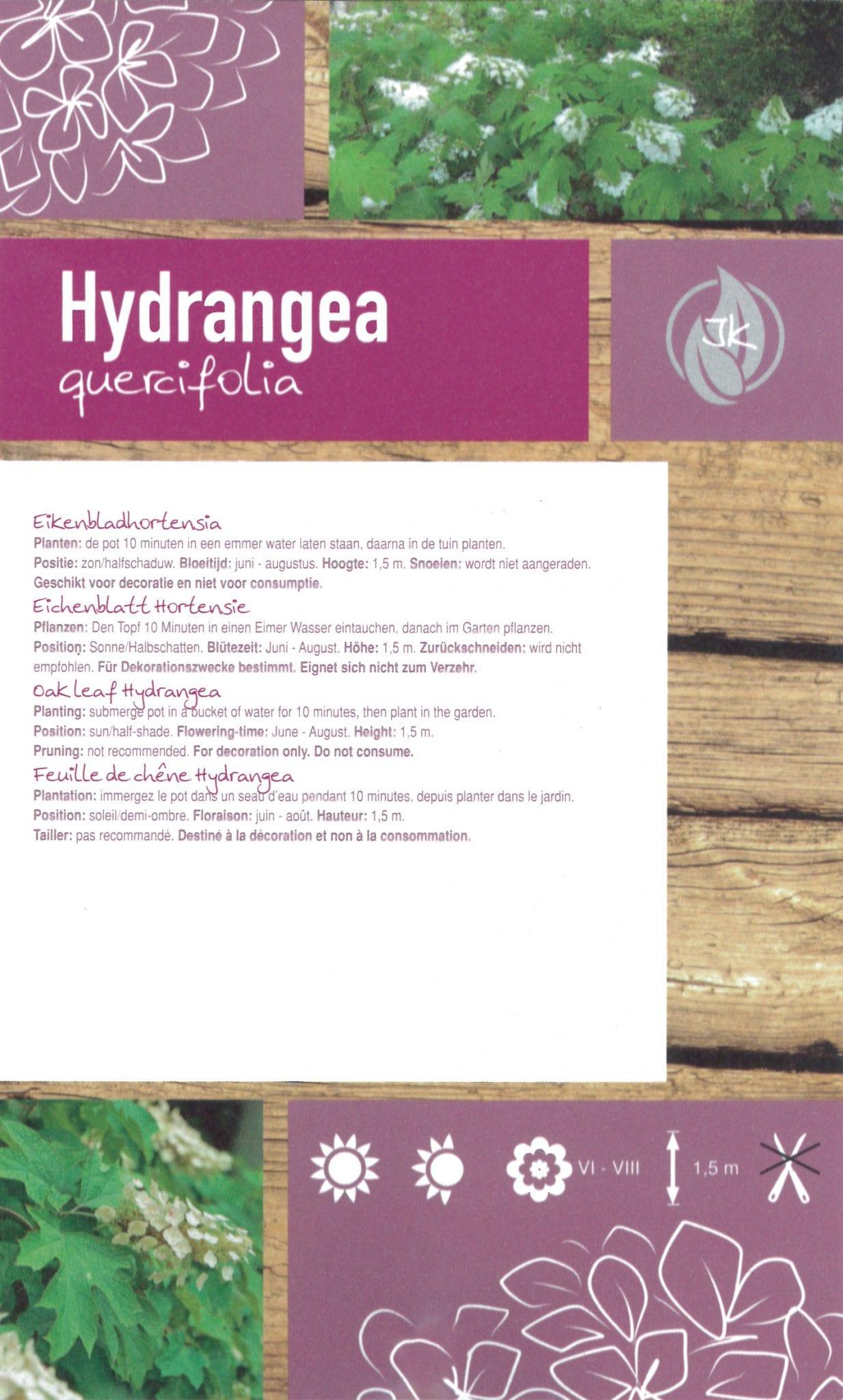 "Hydrangea ""Quercifolia"" etiket achterzijde | Plants By Nature - gespecialiseerd in hydrangea"