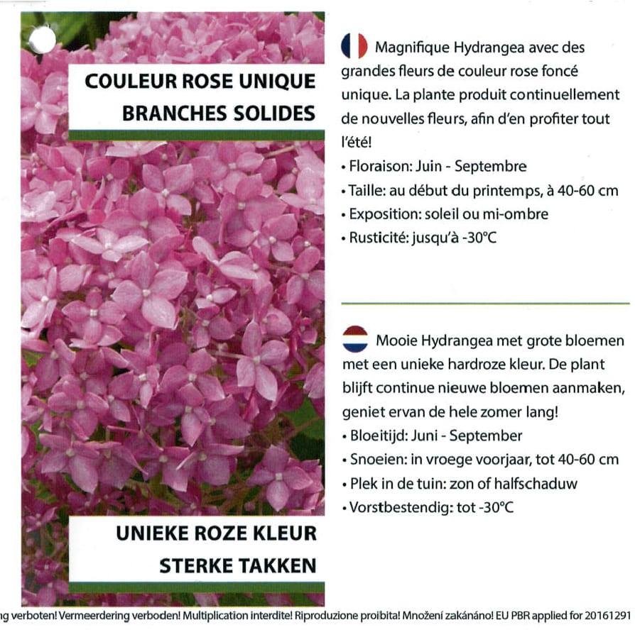 Hydrangea Proven Winners 'Pink Annabelle' etiket binnezijde rechts | Plants By Nature - gespecialiseerd in hydrangea
