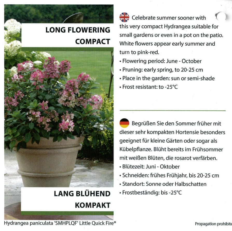 Hydrangea Proven Winners 'Quick Fire' etiket binnezijde links | Plants By Nature - gespecialiseerd in hydrangea