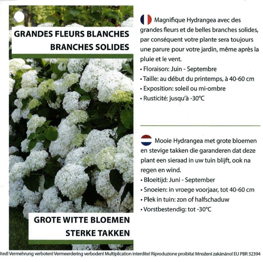 Hydrangea Proven Winners 'Strong Annabelle' etiket binnezijde rechts | Plants By Nature - gespecialiseerd in hydrangea
